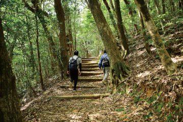 越知町にある神秘の山「横倉山」を舞台に行われるトレッキングツアー!