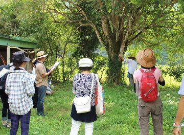 「三原村巨木めぐりツアー」で大自然を感じよう!